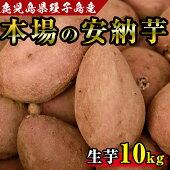 【ふるさと納税】種子島産安納芋(10kg)【あぐりの里】