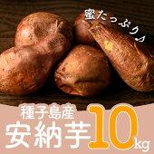 【ふるさと納税】種子島産安納芋(10kg)【種子島安納】