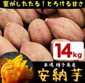 【ふるさと納税】種子島産安納芋