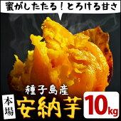 【ふるさと納税】種子島産安納芋10kg