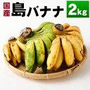 【ふるさと納税】国産 徳之島子宝バナナ 2kg 島バナナ バナナ フルーツ 果物 南国フルーツ くだ