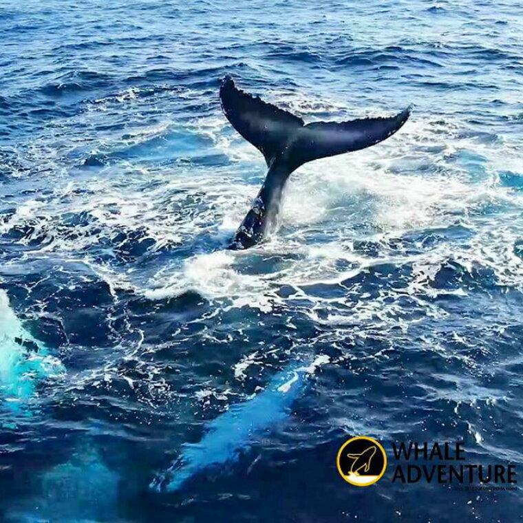 【ふるさと納税】感動の瞬間!クジラウォッチング体験(半日)