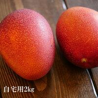 【ふるさと納税】盛賢史さん家のマンゴー2kg(自宅用)