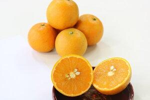 【ふるさと納税】清水果樹園の徳之島たんかん約5kg(化粧箱入り)