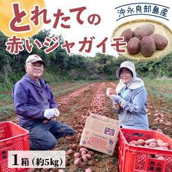 【ふるさと納税】36-01 沖永良部島産 とれたての赤いジャガイモ 画像1