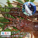 【ふるさと納税】沖永良部島の天然イセエビ2kg 得得イカ柵(不揃い)1kg