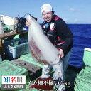 【ふるさと納税】010-17 沖永良部島 イカの王様!ソデイカ身 得得3kg(不揃い)