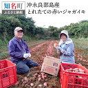 【ふるさと納税】36-01 沖永良部島産 とれたての赤いジャガイモ