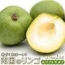 【ふるさと納税】希少!あま〜い南国のリンゴ【ホワイトサポテ】1kg(3〜6個)