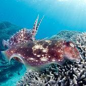 YD-1ファンダイビング利用券石垣島のマンタ・サンゴ・ウミガメに会いに行こう