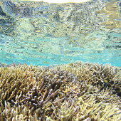 YD-3シュノーケリング利用券石垣島のマンタ・サンゴ・ウミガメに会いに行こう