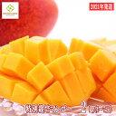 【ふるさと納税】【2021年発送】特別栽培アップルマンゴー2