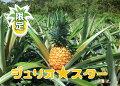 大宜味村産ジュリオスター3玉(3キロ)