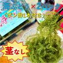 【ふるさと納税】【美ら海沖縄県東村産】茎なし海ぶどう2パック