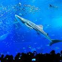 【ふるさと納税】【迫力の大水槽】沖縄美ら海水族館 チケット引換券(家族券)