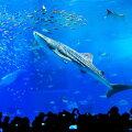 【ふるさと納税】【迫力の大水槽】沖縄美ら海水族館チケット引換券(家族券)