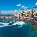 【ふるさと納税】マンタやサメの飼育観察体験ツアー【大人1名様】