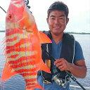 【ふるさと納税】海人(うみんちゅ)と行く沖釣り体験ツアー...