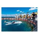 【ふるさと納税】マンタやサメの飼育観察体験ツアー 家族( 大人2名 子供2名)