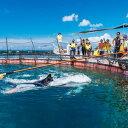 【ふるさと納税】マンタやサメの飼育観察体験ツアー 【大人2名様】