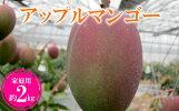 【ふるさと納税】【2019年発送】農家さん直送!アップルマンゴー約2kg家庭用