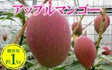 【ふるさと納税】【2019年発送】農家さん直送!アップルマンゴー約1kg贈答用