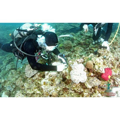 【ふるさと納税】【SeaSeed】養殖サンゴ1株...の商品画像