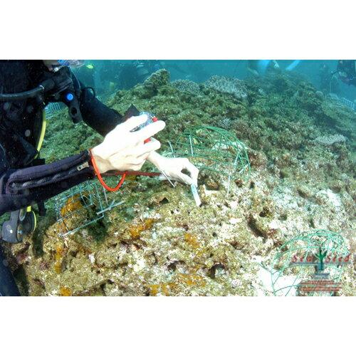 【ふるさと納税】【SeaSeed】養殖サンゴ1...の紹介画像2