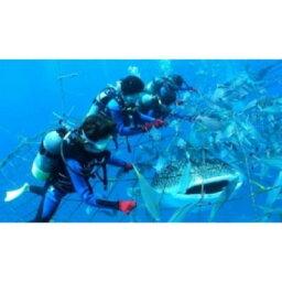 【ふるさと納税】<4名様>圧巻!ジンベエザメ体験ダイビング