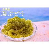 【ふるさと納税】海ぶどう(500g×1個セット)タレ付き