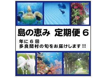 【ふるさと納税】島の恵み定期便6