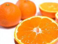 有機肥料栽培で体に優しい柑橘類を農園から直送【送料無料・産地直送】低農薬・防腐剤・ワック...