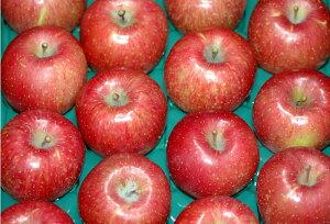 長野産 減農薬 陽光 りんご 贈答用 約9kg24〜32個入 林檎 リンゴ 産地直送