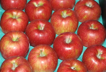 訳あり 長野産 りんご シナノスイート 大玉10kg24個〜28個 入 NN