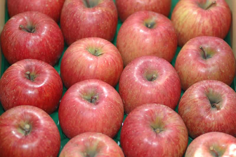 減農薬 長野 サンふじ りんご A品 約4.5kg 12~23個入 リンゴ 林檎 産地直送 小山