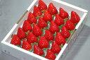 最高糖度17度!ももいちごを上回る甘さ!出たばかりの新品種イチゴ【送料無料】徳島産 さくらも...