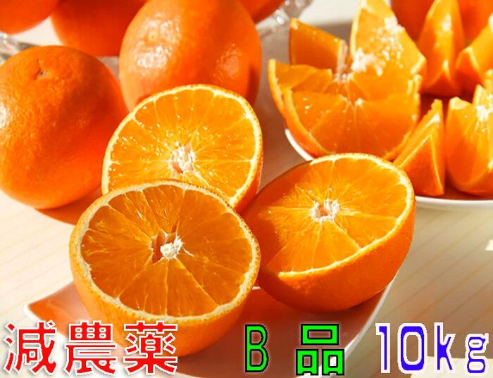 訳あり 減農薬 紅まどんな と同品種 みかん あいか 約10kg B品 サイズ混合 愛媛 産地直送 ore 大三島 SSS 12t