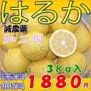 【訳あり】愛媛産 減農薬 はるか 約3kg 加工用 みかん 産地直送 ore