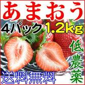 送料無料 産地直送 低農薬 福岡県産あまおう ご家庭用 小粒 4パック 1200g 約80粒前後入 いちご 苺 イチゴ 訳あり あまおう苺