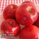 減農薬 長野 生食用 紅玉 りんご A品 約8kg 小玉24〜50個入 リンゴ 林檎 生食用 産地直送 小山 SSS