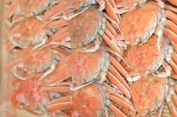 ボイルせこ蟹 松葉蟹の雌 10〜12尾入 松葉がに 松葉蟹 松葉ガニ お歳暮 御歳暮 ギフト