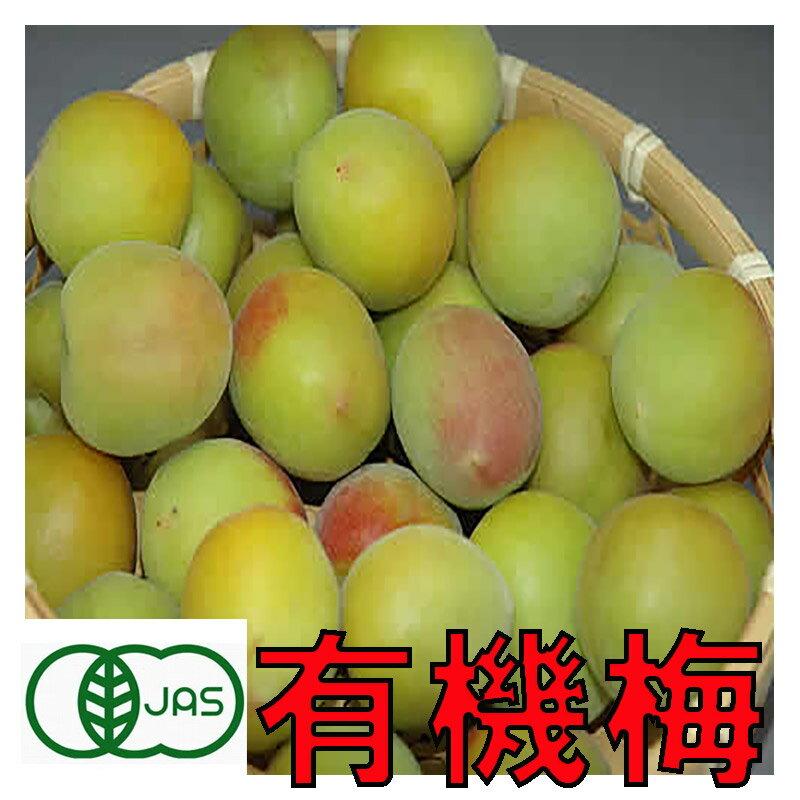 有機JAS 和歌山 生梅 NK14 梅干し用 3kg 青梅 訳あり サイズ混合 産地直送 南高梅 の親品種