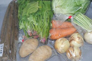 無農薬 有機栽培 旬の野菜セット 産地直送 有機農法 有機農業