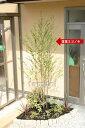 【関西限定施工】シンボルツリー・低木・下草などセットになって植え込みまで致します!【お庭...