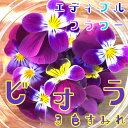 2月末までお買い得価格!ビオラ/3色すみれ 20輪(食用花)...