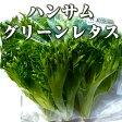 ハンサムグリーンレタス/green leaf lettuce 120g 伊勢志摩産・水耕栽培