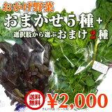 JGAP認証農場 水耕栽培 おかげ野菜おまかせ5種さらにおまけ野菜2袋