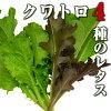 クワトロ/4種のレタス(ベビーリーフ)