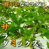 サラダミックス(ベビーリーフミックス)50g 伊勢志摩産・水耕栽培