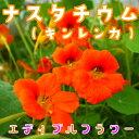 ナスタチウム(キンレンカ)(食用花) 伊勢志摩産・水耕栽培